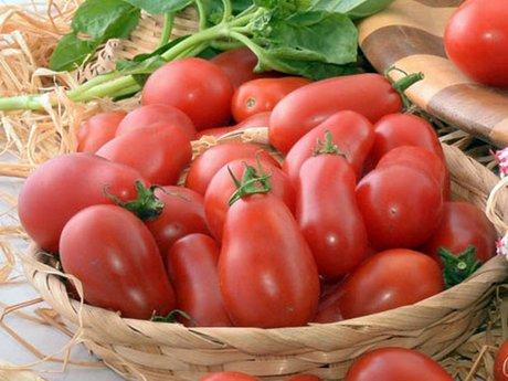 Pomodoro Corbarino. Il pomodorino di Corbara