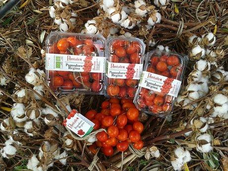 Pomodori Regina Pantaleo